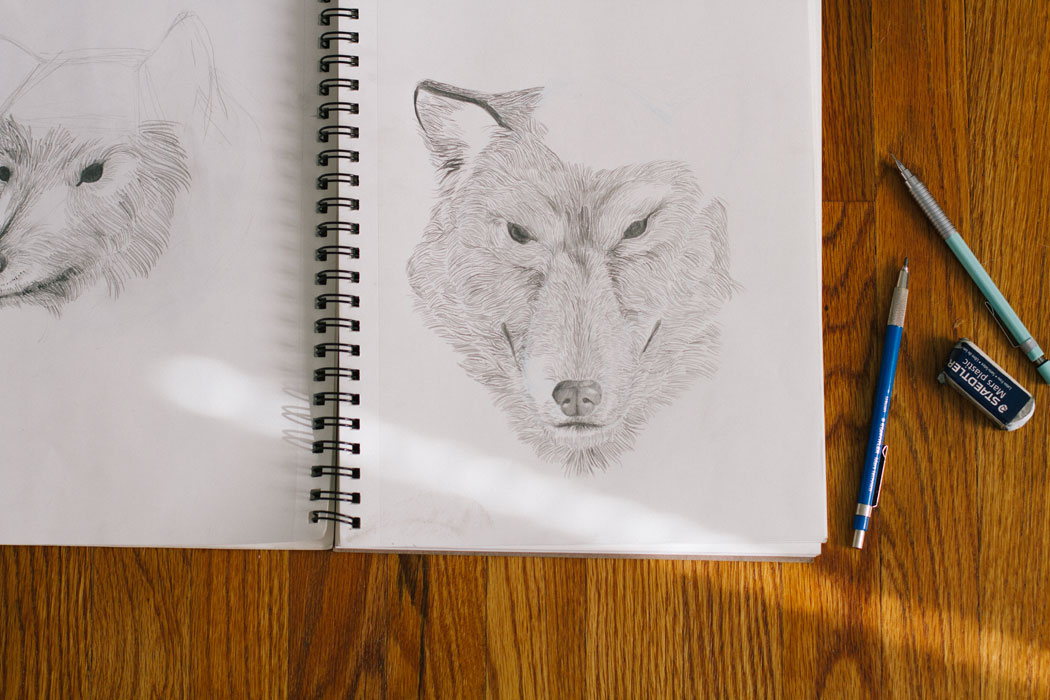 Unfinished wolf sketch