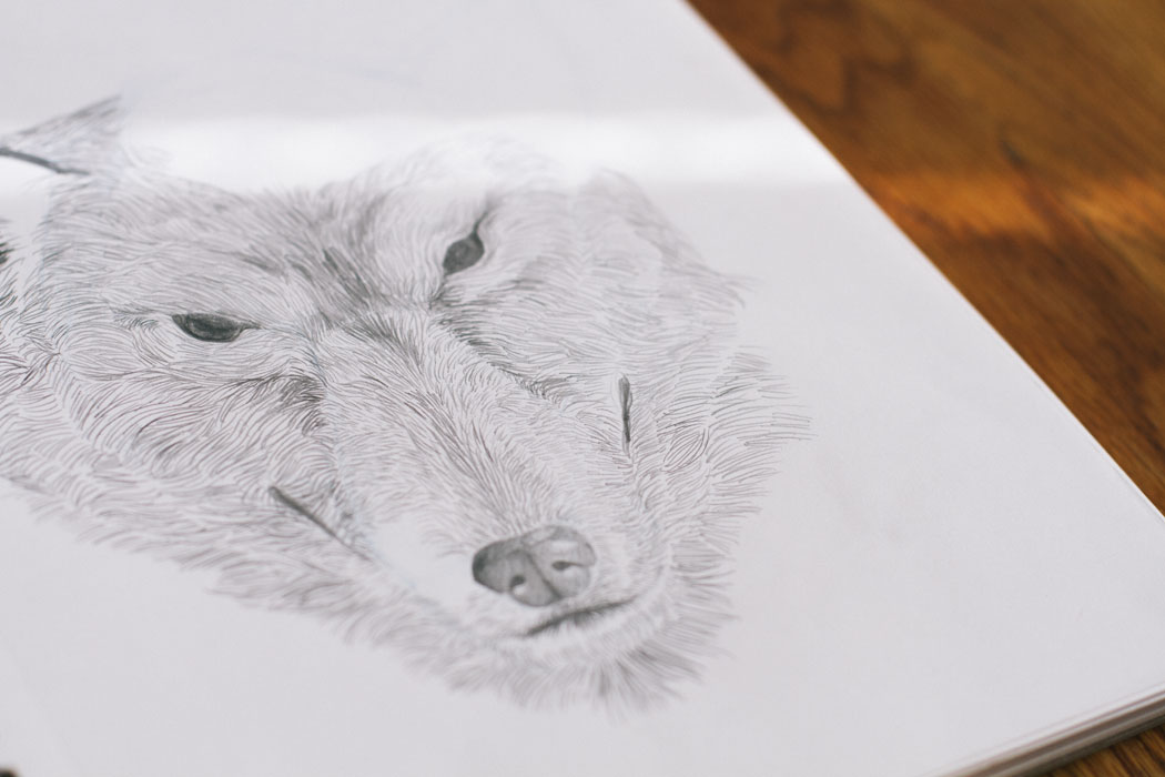Close-up detail of unfinished wolf sketch