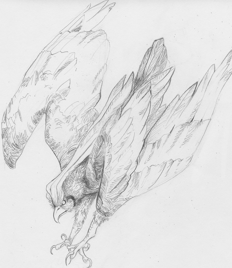 A preliminary pencil drawing of Pigeot before coloring.